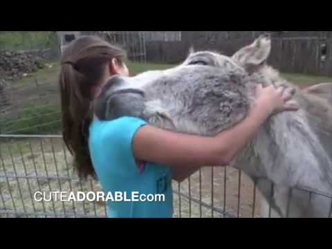 Xxx Mp4 Cute Friendship Donkey And Girl 3gp Sex