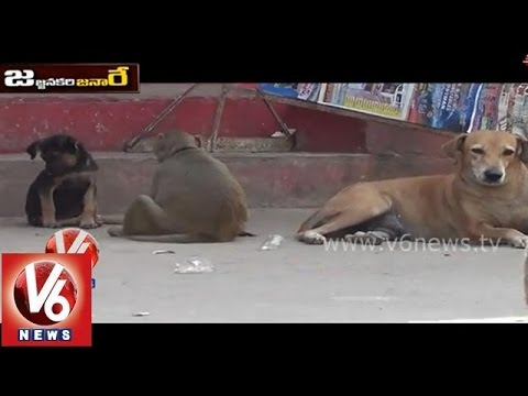 Xxx Mp4 Funny Monkey And Dog Talk About Aadhaar Card Jajjanakare Janaare V6 News 3gp Sex