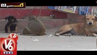 Funny Monkey And Dog Talk  About Aadhaar Card || Jajjanakare Janaare || V6 News