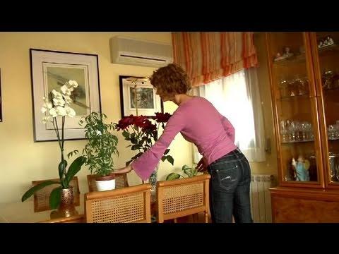 Cómo adornar tu casa con plantas