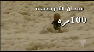 شاهد زبد البحر سبحان الله HD