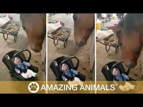 Xxx Mp4 Horse Rocks Crying Baby 3gp Sex
