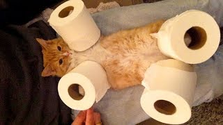LAUGH SUPER HARD at FUNNY ANIMALS - Funny ANIMAL compilation