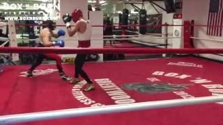 Conor McGregor boxing sparing Chris Van Heerden, 2016