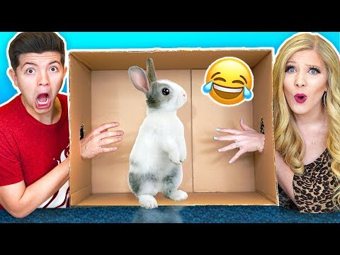 What s In The Box Challenge with My Wife Live Animals Snake Lizard Giant Toad