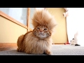 CATS You Will Remember And LAUGH All Day World S Funniest Cat Videos mp3
