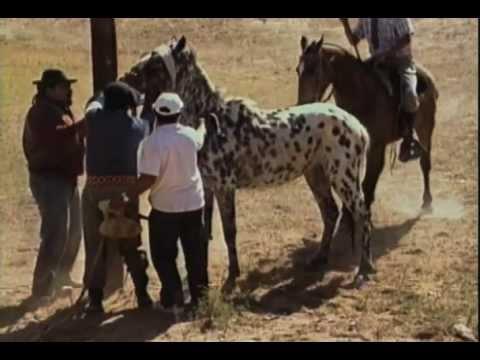 New Video Doma en Argentina part 2 Argentina Rodeo