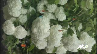 نماهنگ-کلیپ-طبیعت-13 بدر -زیبا -ایران-جهان-