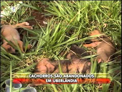 Filhotes de cachorros são abandonados às margens da Br 050
