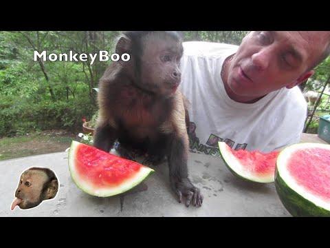 Xxx Mp4 Monkey Loves Watermelon 3gp Sex