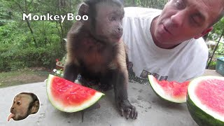 Monkey Loves Watermelon