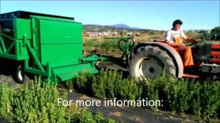 Stevia harvester