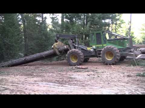 Logging Operation In The Woods