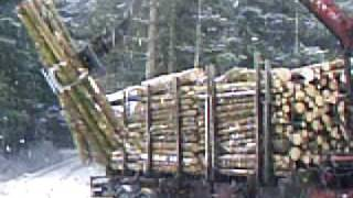 timber truck loading 2