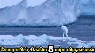 தீடீரென கேமராவில் சிக்கிய 5 மர்ம மிருகங்கள் | 5 mystery creature caught on camera | Tamil
