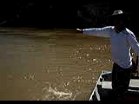 Pesca de Dourados no Rio São francisco 3