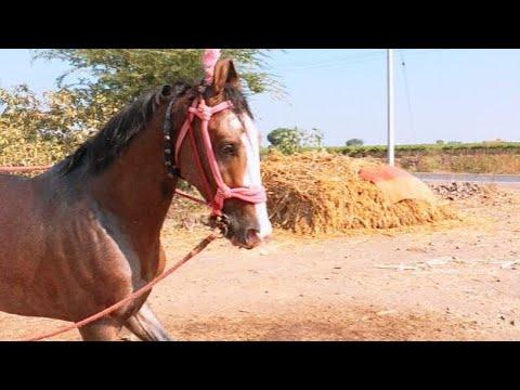 Xxx Mp4 Indan Horse 3gp Sex