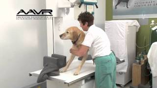 Hands Free Radiography with Vet Ray Technology by Sedecal