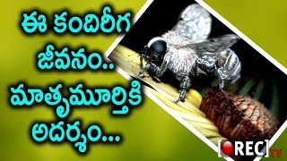 Life Cycle of the Wasp | Interesting Facts | Telugu Mystery Videos