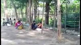 Lice lover of Suhrawardy Uddyan (উকুন প্রেমিক)