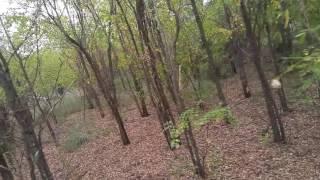 Unreleased video...Coyote or Dogman?