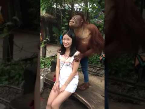 Cewek di ganggu monyet. Keenakan