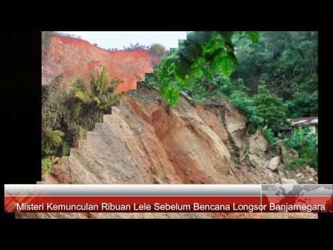 Misteri  Ribuan Lele Sebelum Bencana Longsor Banjarnegara