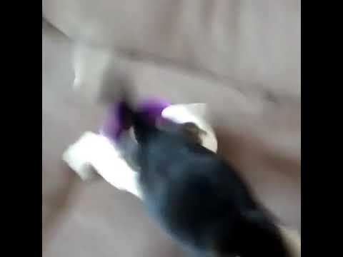 Puppy wakes up from sleep after smelling food