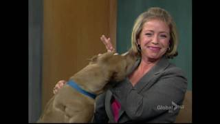 BCTV noon news: dog licking the news host