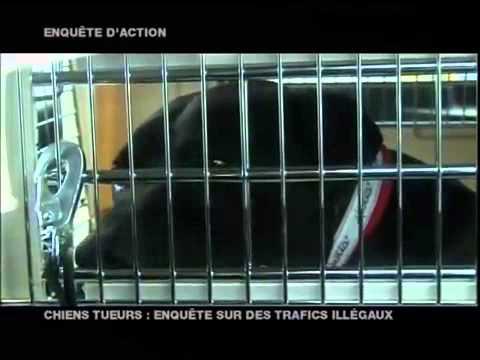 W9 Chiens dangereux avec Hervé Pupier Diffusion du 16 01 2008