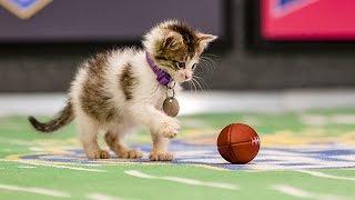 Mr. Slippers Goes Deep_ Kitten Bowl III