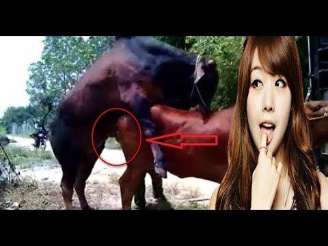 Xxx Mp4 Wow Amazing Man Breeding Cow How To Breds Cows How To Breed Cows Breed Cows In My Country 1 3gp Sex