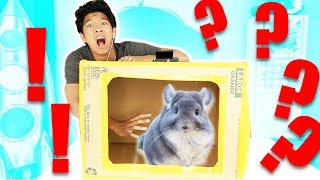 Whats In The Box??!!! ( ANIMALS!!)