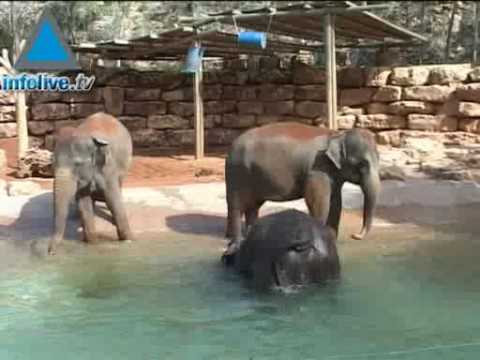 Crimen en el zoológico