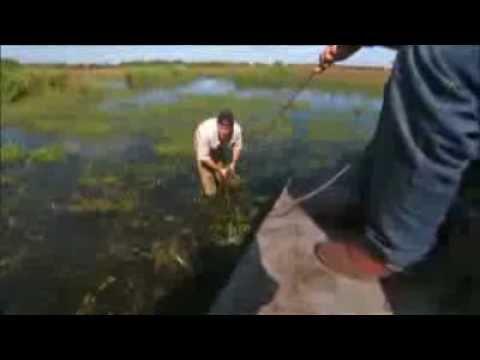 Desafios Mortais Porco Selvagem DUBLADO