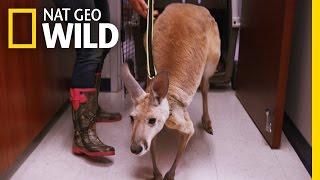 Pogo's Problem | Animal ER
