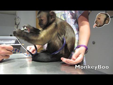 Xxx Mp4 Monkey Vet Visit 3gp Sex