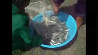 Serpme adı verilen ağ ile dereden balık tutma