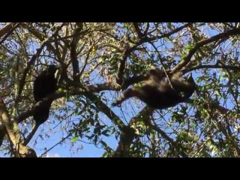 Xxx Mp4 Was This Raven Trying To Skare Racoons Off His Tree 3gp Sex