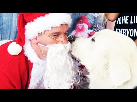 Xxx Mp4 DOG MEETS SANTA FOR THE FIRST TIME Super Cooper Sunday 172 3gp Sex
