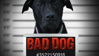 BAD DOG - A Short Film by Justin Burt