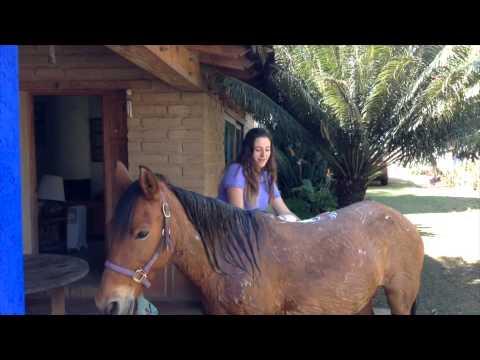 Como bañar a tu caballo