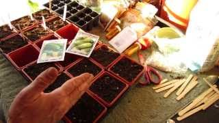 For New Gardeners: How to Seed Start Cucumbers Indoors: Plant Different Sizes! - MFG 2014