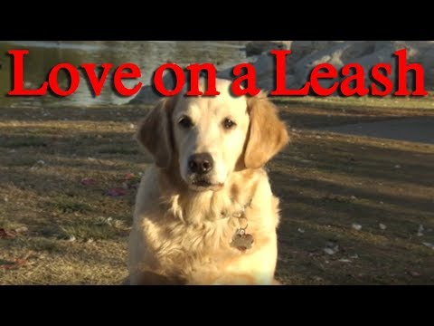 LOVE ON A LEASH ralphthemoviemaker