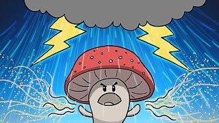 How Mushrooms Make It Rain