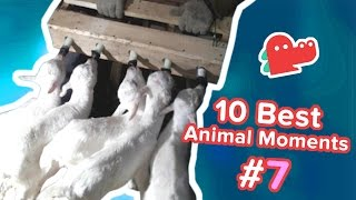 10 Best Animal Moments of the Day #7