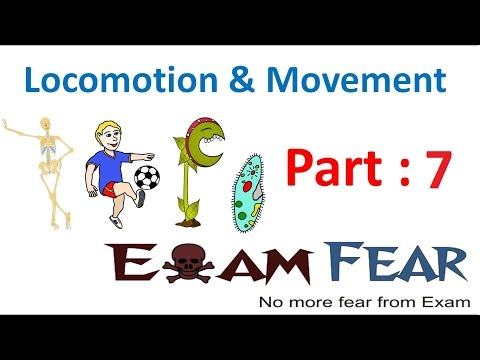 Biology Locomotion & Movement part 7 (Striations in Muscle Fiber, Actin, Myosin) CBSE class 11 XI