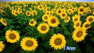 Bihan Bera Jekhan Suraj बीहन बेरा जेखन सूरज Christian devotional sadri song