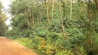 On the way to Lawchapra tourist spot,Sherpur-Jamalpur border.