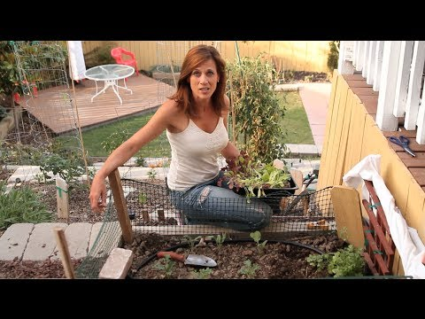 Xxx Mp4 How To Grow Lettuce In Hot Weather Quick Easy Tips 3gp Sex